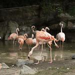 LA Zoo Grifith Park Oct 22 2020-321