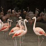 LA Zoo Grifith Park Oct 22 2020-317