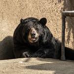 LA Zoo Grifith Park Oct 22 2020-462