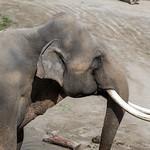 LA Zoo Grifith Park Oct 22 2020-419