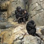 LA Zoo Grifith Park Oct 22 2020-403