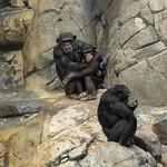 LA Zoo Grifith Park Oct 22 2020-402