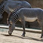 LA Zoo Grifith Park Oct 22 2020-355