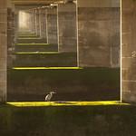 Heron Under Tay Bridge by Rachel Dunsdon