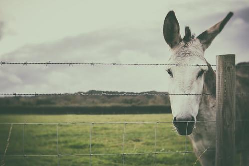 23/31: Not a Wonky Donkey