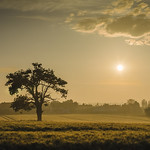 Early in Welham Green by Phil Luck
