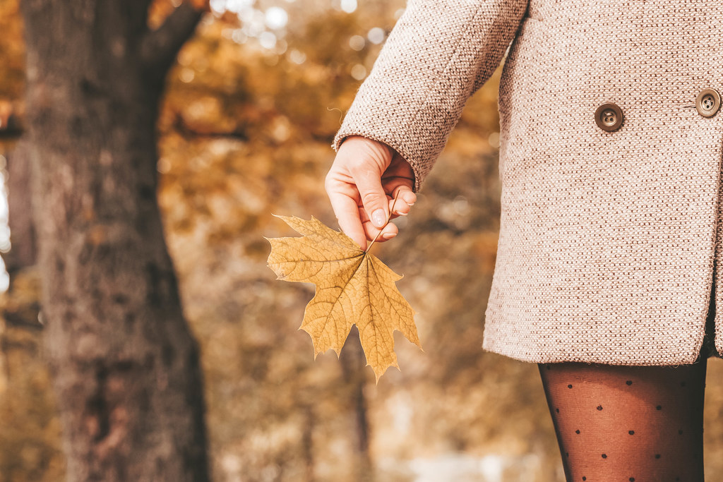 Maple yellow leaf in the girl's hand