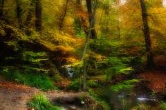 Pont Burn Woods, Burnopfield