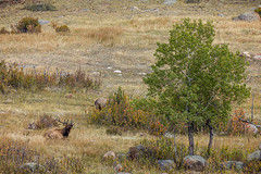 A-IMG_0865