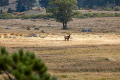 A-IMG_0874