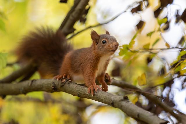 Photo:Babysquirrel By Joachim Dobler