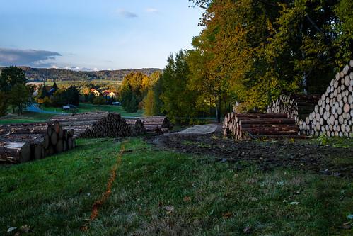 Wald in Wurbis