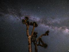Joshua Tree Milky Way Starry Skies Light Painting California Desert Fine Art Landscape Nature Photography! Joshua Tree National Park Fuji GFX 100 Zen Tao Photography! Elliot McGucken 45EPIC Master Medium Format Photographer Fujifilm GFX100!