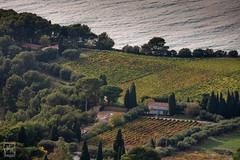 vignes de Cassis