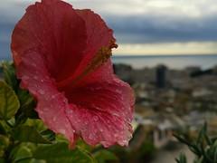 La pioggia e i fiori
