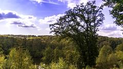 DSC_0549 - Photo of Rochefort-en-Yvelines