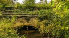 DSC_0528 - Photo of Rochefort-en-Yvelines