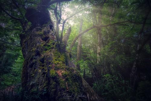 Asturias' Forests (Explorer)