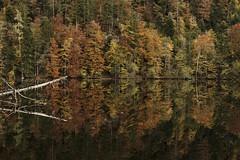 Nussensee - Autumn