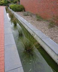 Ornamental Grasses in Long Pond