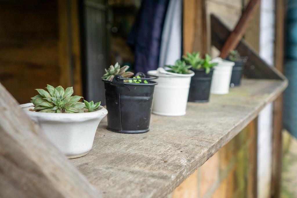 Close Up Photo of Miniature Plant Pots on a Wooden Windowsill