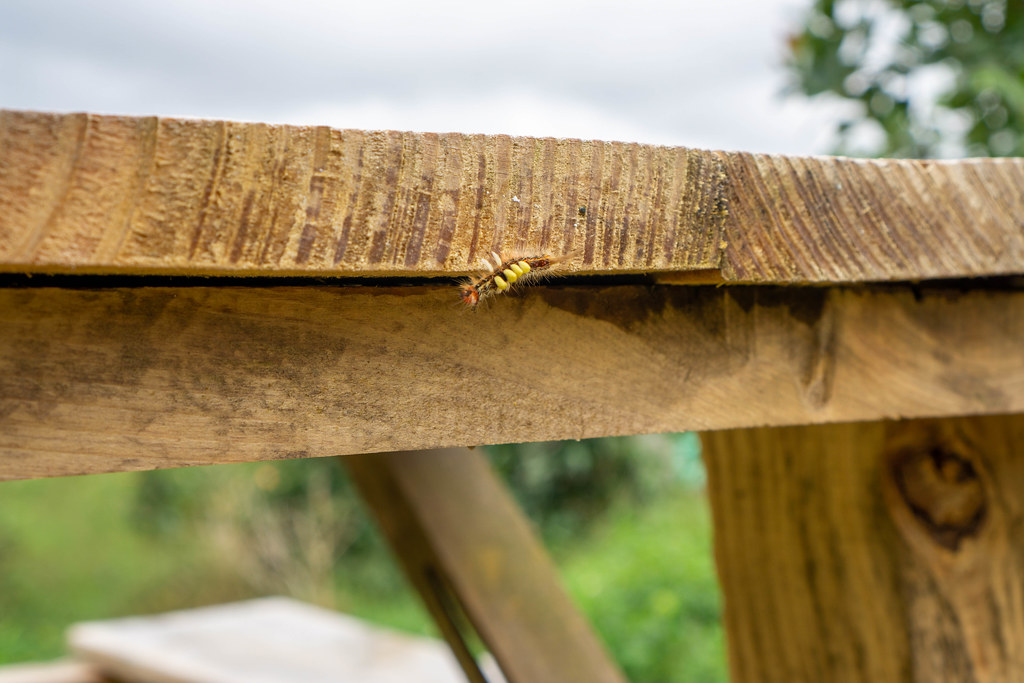 Close Up Photo of a Black and Yellow Caterpillar on a Wooden Table