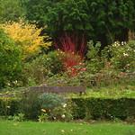 Linda Vista Dogwood Autumn