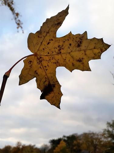 Jetzt ist Herbst