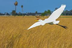 Aves correntinas