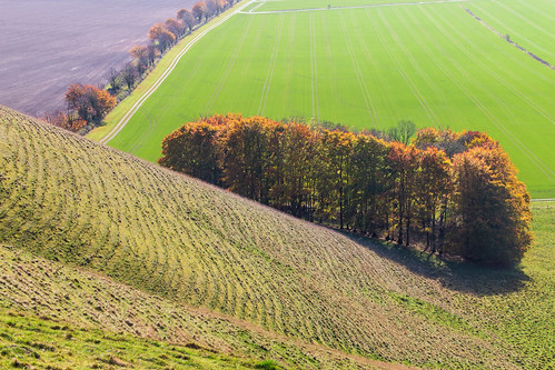 Autumn in the North Wessex Downs