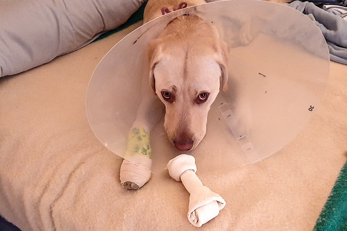 My sad little guy