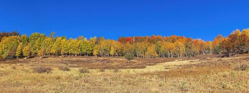 Autumn Colors - 101020850_3397_9274