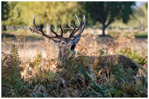 King of Bushy Park …
