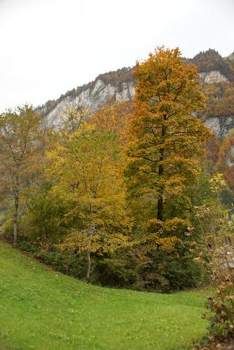 Tolle Farben im Herbst