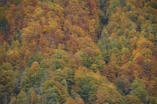 Herbst: Alle Farben sind sichtbar...