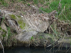 Reeds on Rocks