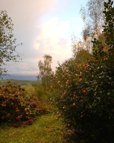L'automne au jardin, après l'averse de grêle, Bosdarros, Béarn, Pyrénées Atlantiques, Nouvelle-Aquitaine, France.