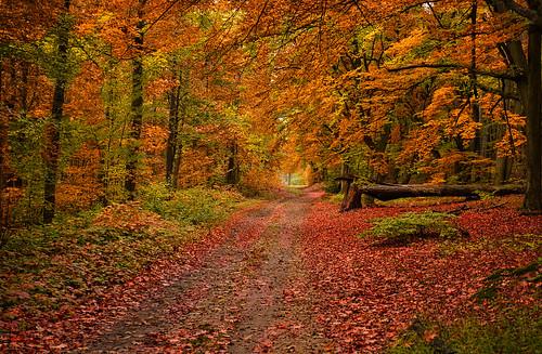 Bunter Herbst Wald