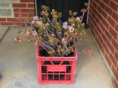 Plant in Pot in Crate