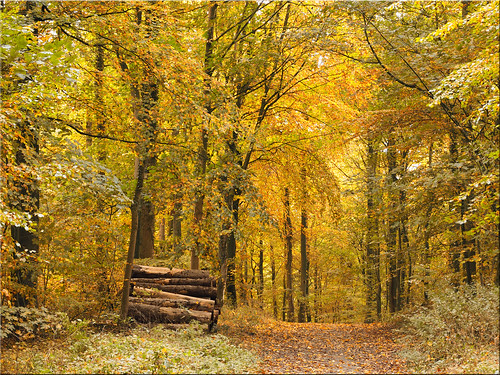 Autumn in the Scharbeutzer Heath forest
