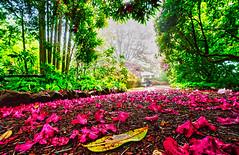 Forest Glade Park, Mount Macedon