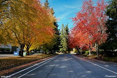 Colors of Fall in Redmond