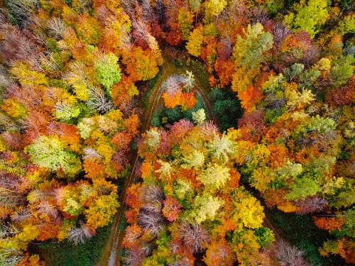 Autumn Color Explosion