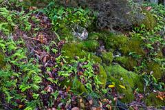 Verts - Photo of Sourcieux-les-Mines