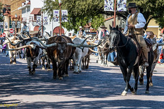 Longhorns in Fort Worth