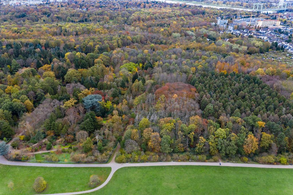 Luftbild zeigt bunten Wald im Herbst, am Stadtrand der deutschen Großstadt Köln