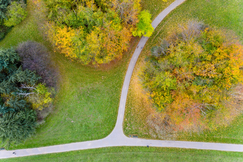 Aerial picture of people taking a walk in the park, next to trees in bright autumn colours and colourful leaves