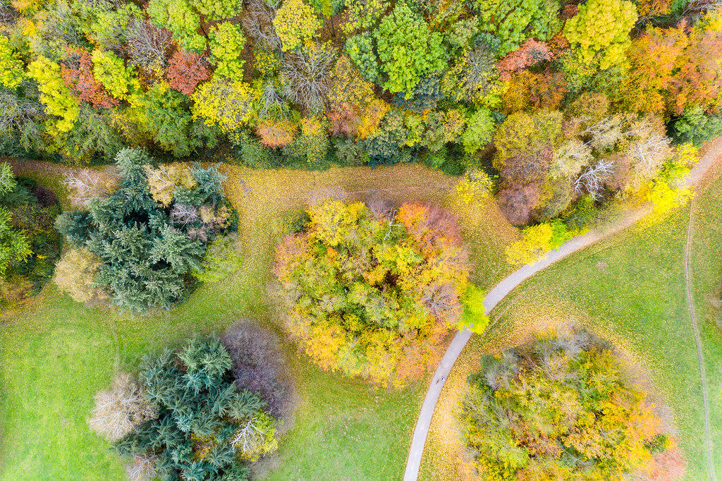 Urban development at Colognes green belt: aerial view shows a colorful forest and park in autumn