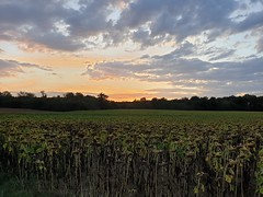 Sunset - Photo of Bouhy