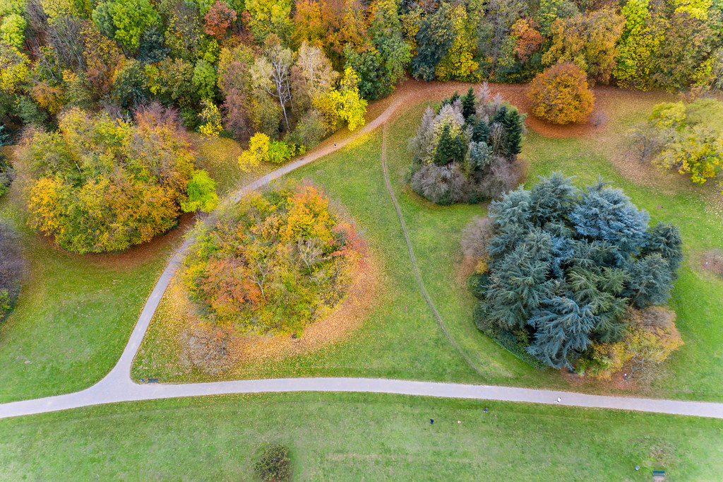 Aerial shot of colourful orange and red foliage of the autumn trees on a meadow in the park botanical garden cologne, Germany